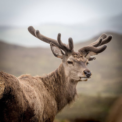 Colin Murdoch Highland experience deer and argo by Laurence Norah-9
