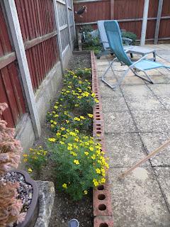 Tagetes, marigold and petunias
