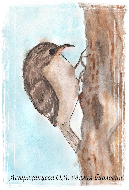 ptica-pishchuha-magiya-biologii