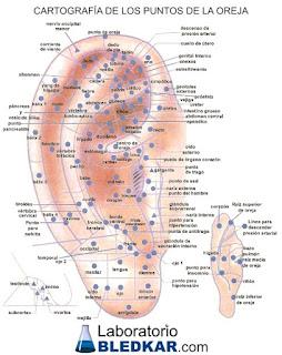 mapa auriculoterapia