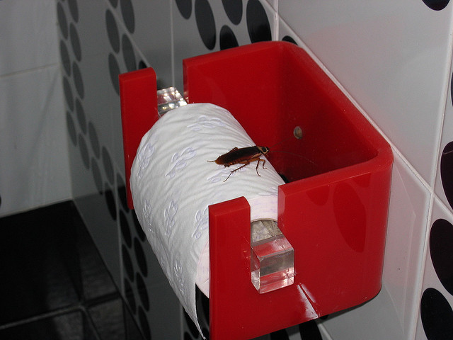 Cómo matar cucarachas