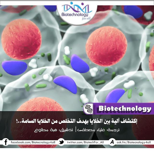 دراسة تفيد استخدام الخلايا لآليات لألتهام بعضها قبل أن تصبح سامة