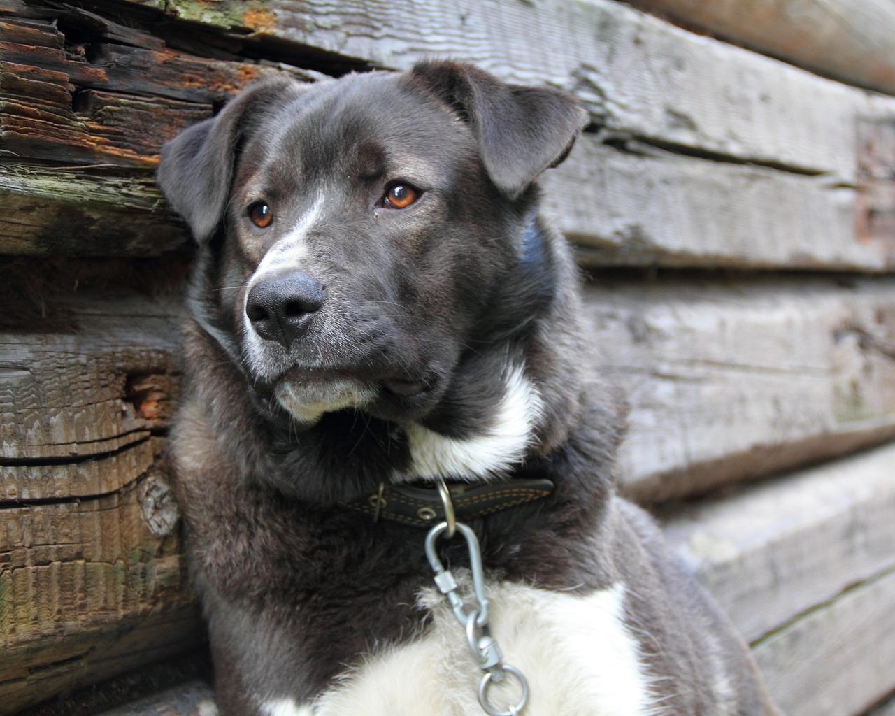 Собаки: Картинки