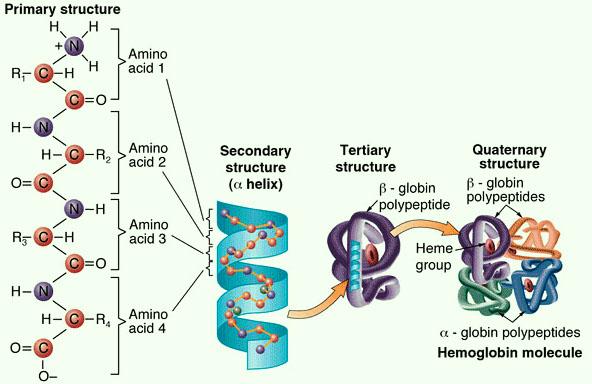 Seven Days per Week STPM Biology Biological Molecules (Part 15)