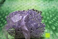 Schleife machen: 50pcs Wedding Candy Boxes Butterfly Laser Cut Kartonage Schachtel Bonboniere Geschenkbox Hochzeit (Purple)