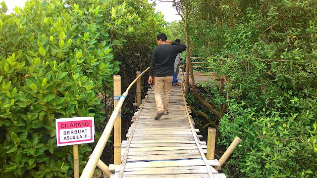 Hutan Mangrove Pasir Kadilangu