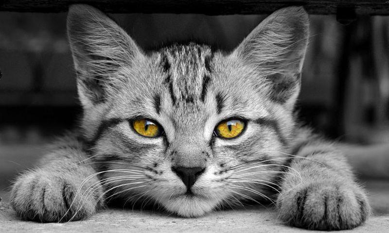 Συμβουλές για να σταματήσει η γάτα σας να κάνει τα τσίσα της έξω από τη λεκάνη με την άμμο