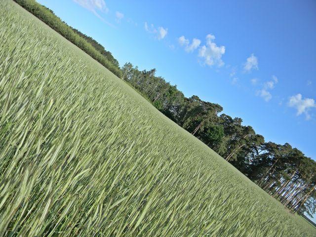 pola, uprawy, niebo, las