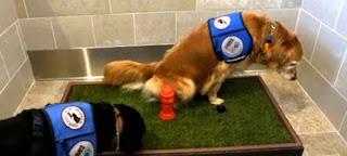 cães em aeroportos