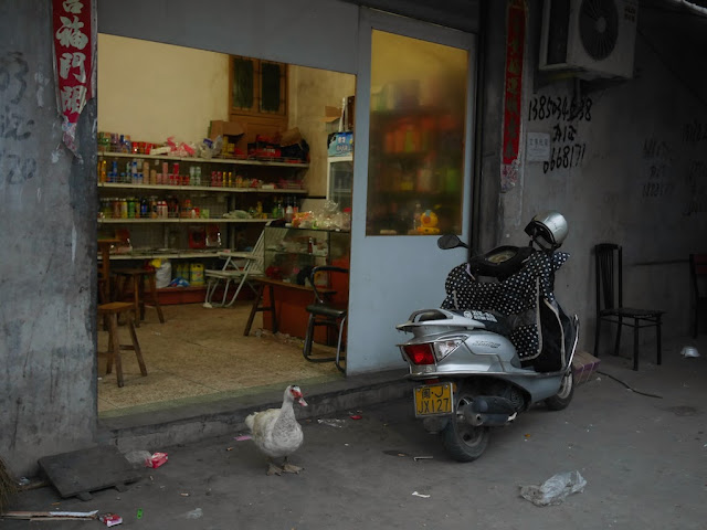 duck standing in front of the entrance to a convenience store in Xiapu, Fujian, China