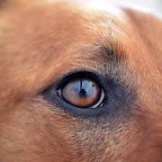 В районе Стоунхенджа обнаружена древняя домашняя собака