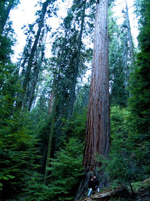 Roberto y Maribel bajo un redwood en Kings Canyon