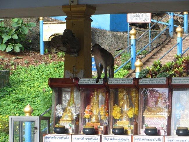 Обезьяны в буддийском храме