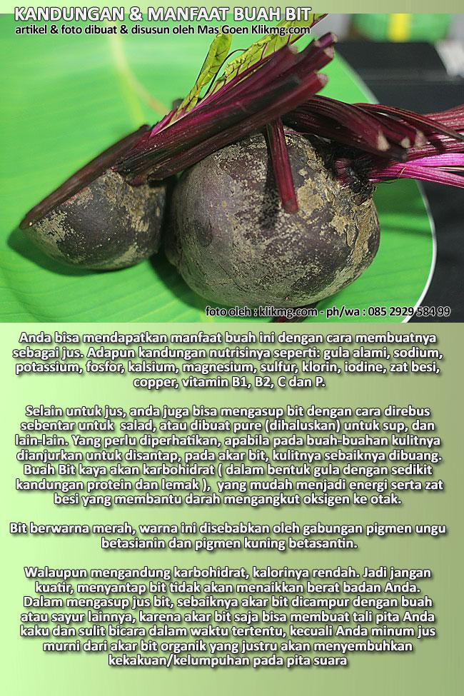 Kandungan & Manfaat dari Buah BIT [ Foto & Artikel Kesehatan ] - Klikmg.com Fotografer  Purwokerto