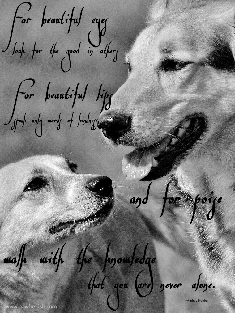 Dogs interpretation of the Audrey Hepburn quote, for beautiful eyes.