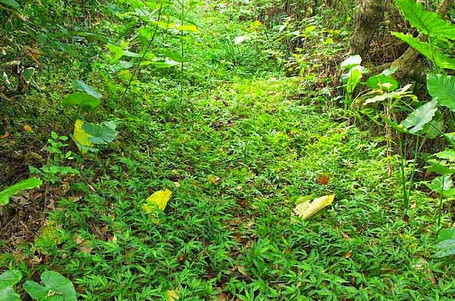 overgrown trail,vegetation
