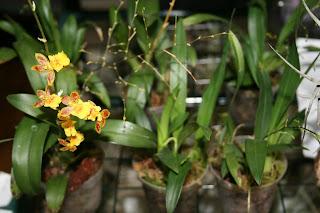 orquideas terrario