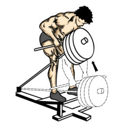 t bar row,back workout