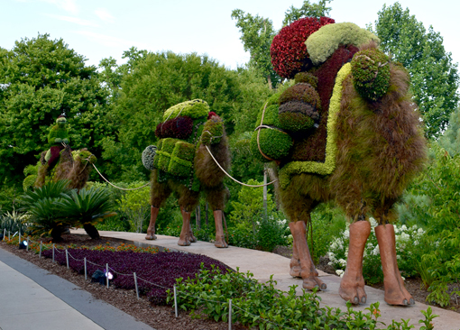 Camels| Imaginary Worlds | Atlanta Botanical Garden | Photo: Travis S. Taylor
