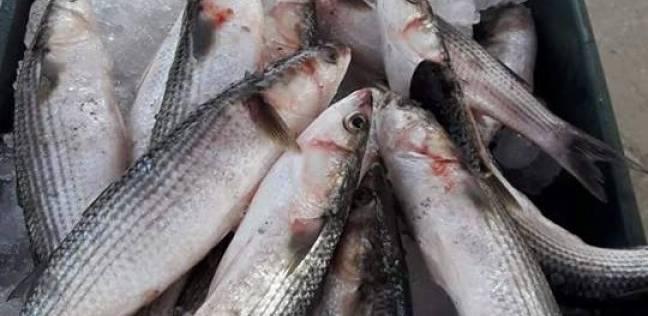 أسعار الاسماك اليوم في مصر شهر ديسمبر 2017
