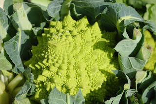 Picture: Fractal repeating pattern on brassica