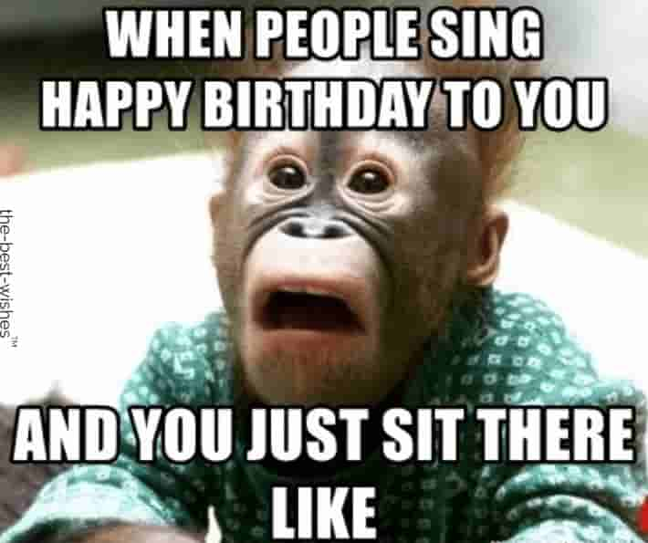 funny shocked monkey memes for birthday