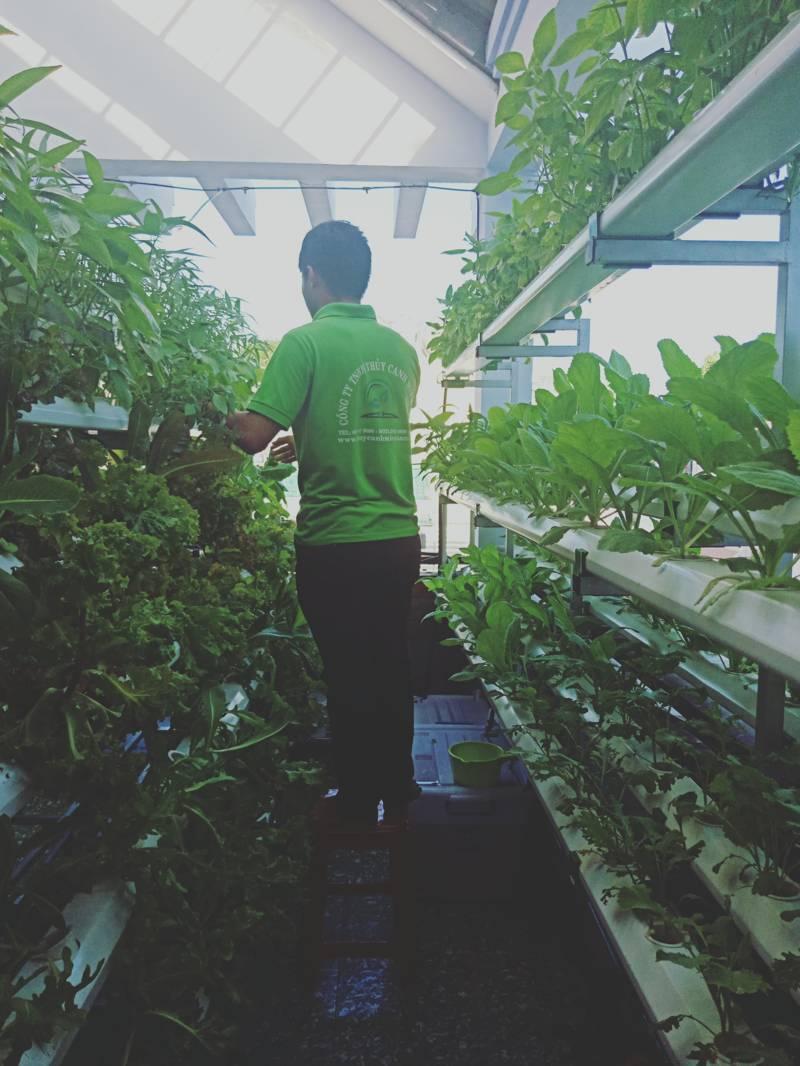pha dung dịch trồng rau thủy canh đúng cách