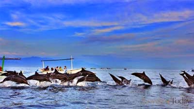 Sekumpulan lumba-lumba di lovina