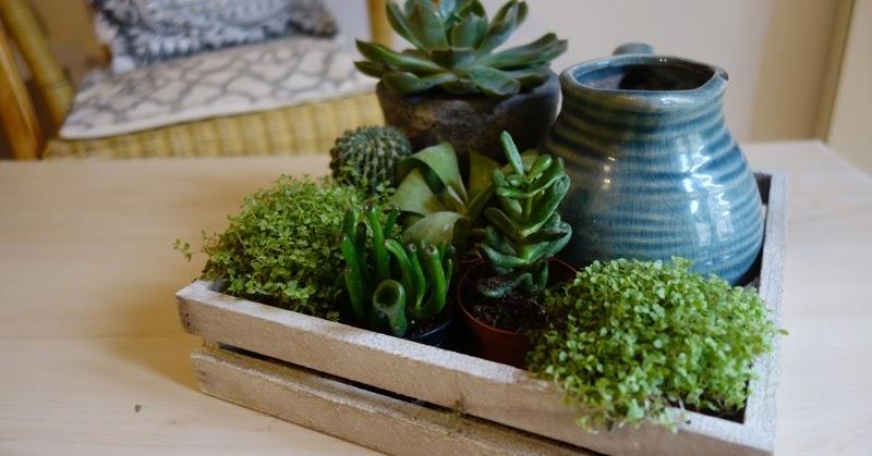 by laura blog voyages diy lifestyle diy 4 composition de mini plantes grasses. Black Bedroom Furniture Sets. Home Design Ideas