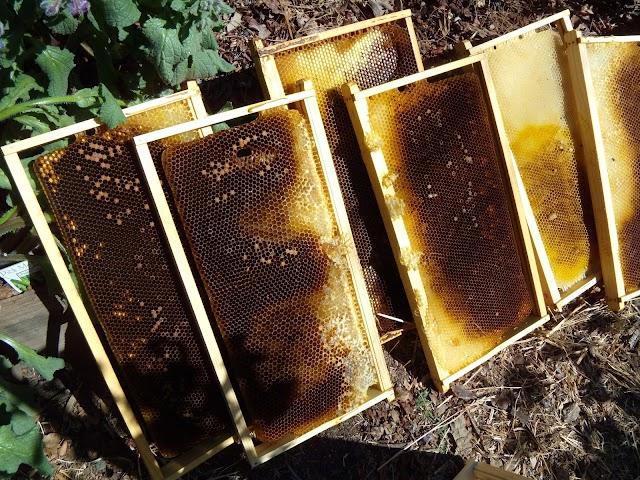 Αξεπέραστη μέθοδος για αποθήκευση πλαισίων. Πατέντα από παλιό μελισσοκόμο!