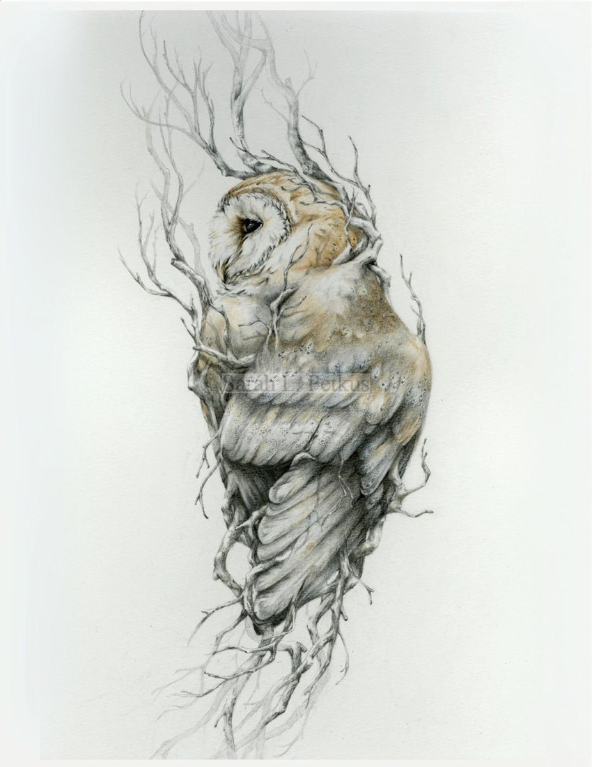 02-Barn-Owl-Sarah-Leea-Petkus-Animal-Drawings-Steeped-in-Symbolism-and-Surrealism-www-designstack-co