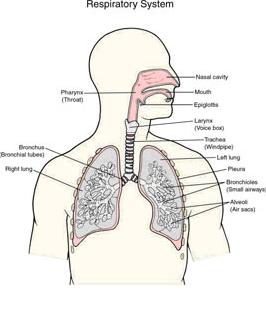 Mekanisme Pernafasan