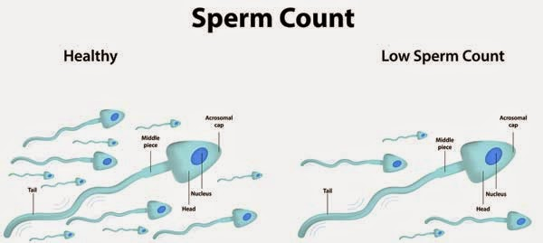 human sperm enhancements