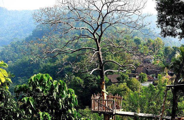 Spot Watu Tekek di Kulon Progo