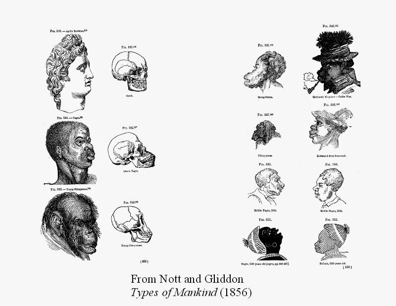 Until Darwin: Science & the Origins of Race