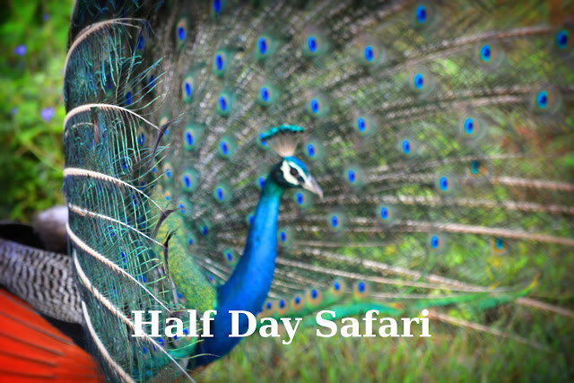 Half day safari in udawalawe national park