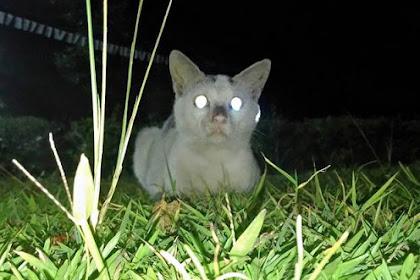 Mata Hewan Bersinar Dalam Gelap Atau Saat Terkena Cahaya Lampu Kilat? Jangan Heran