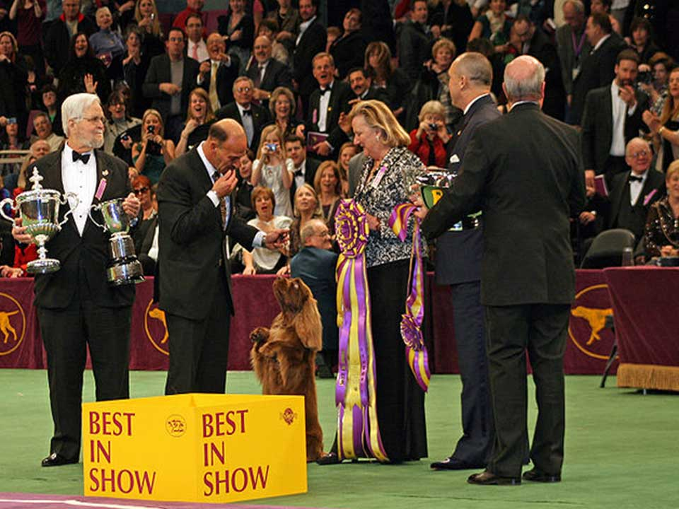 Sussex Spaniel is an Energetic, Affectionate, and Sociable ...