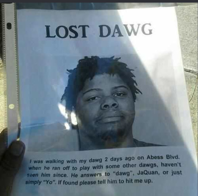Funny Lost Dawg Sign Picture