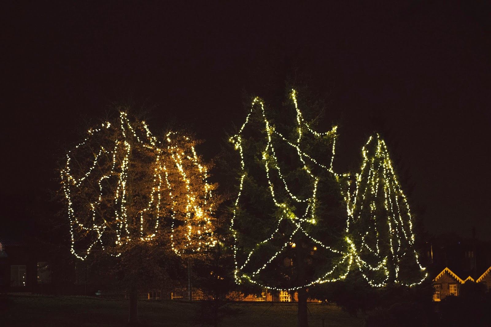 Christmas Lights, Katie Writes,
