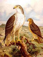 http://www.biologie.uni-hamburg.de/b-online/birds/regdeu.htm