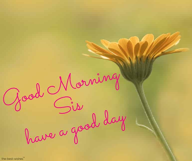 good morning sis have a good day