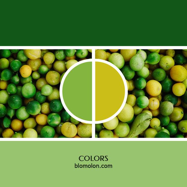 variedad_en_color_color_17