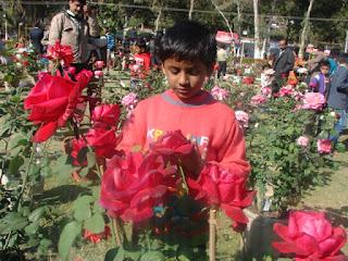 गुलाबों के दरबार में कुछ स्मृतियां