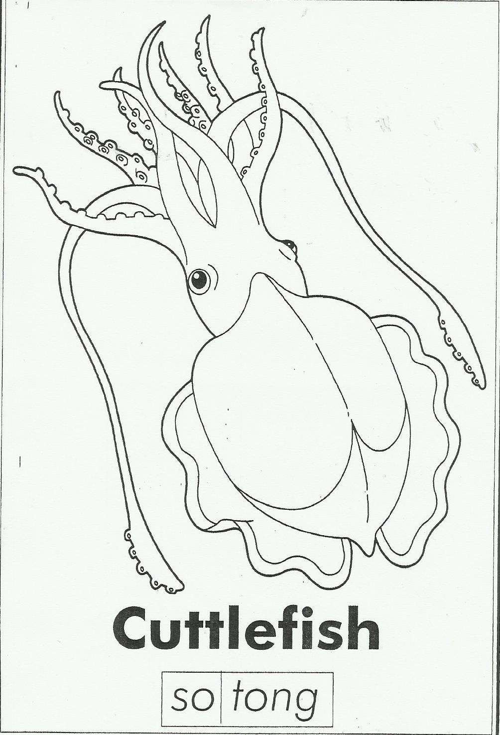 Coloring page cuttlefish img 27230 sketch coloring page for Cuttlefish coloring pages