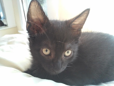 Pan the kitten