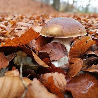 3 najgroźniejsze mity, o których musisz wiedzieć zanim pójdziesz na grzyby!