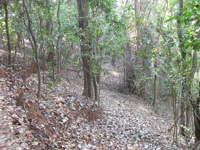 Индийские джунгли Indian jungle