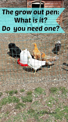 grow out pen for chickens