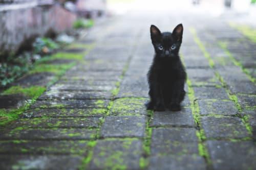 ブラックスワンならぬ黒い猫